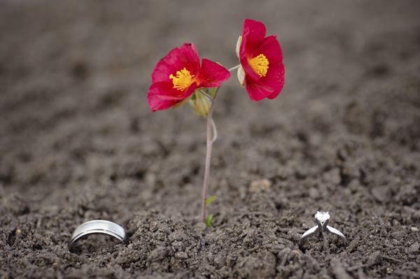 red flower planted between both wedding rings - wedding photo by top Portland, Oregon wedding photographer Aaron Courter