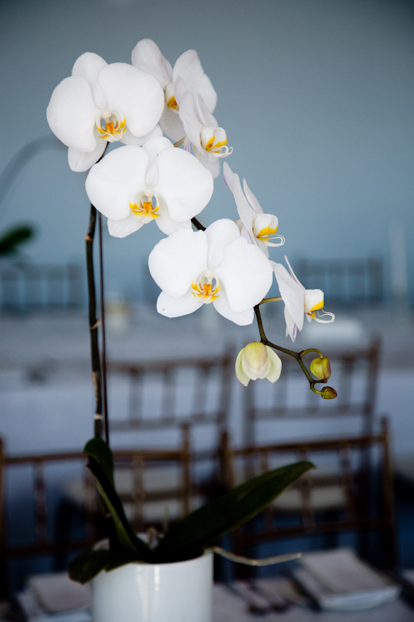 White Orchid Wedding Centerpiece Wedding Photo By Christine