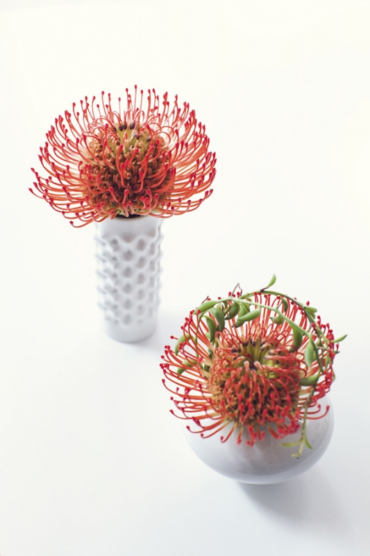 red protea in milk glass vases, photo by Studio Uma