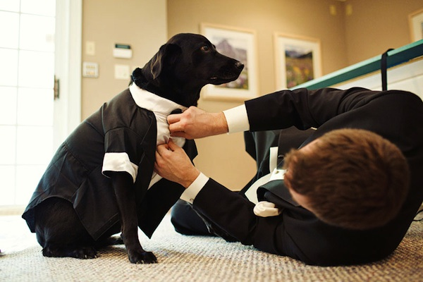 fun wedding day photo of dog getting dressed by groom before ceremony - photo by top Indiana wedding photographers Bobbi and Mike