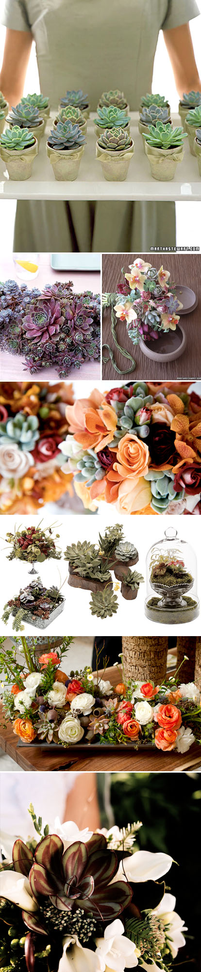 spring wedding bouquets, centerpieces, boutonnieres and floral decor with succulents