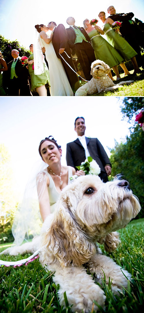 Wedding ideas for including your dog in your wedding! Photos by Jules Bianchi Photography via JunebugWeddings.com