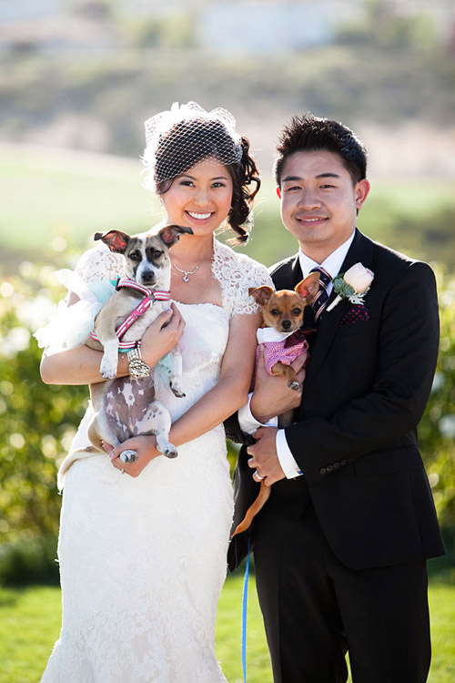 Clothing and accessories for dogs in weddings! Photos by Jules Bianchi Photography via JunebugWeddings.com