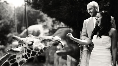 wedding couple with their giraffe, image by Amy and Stuart Photography