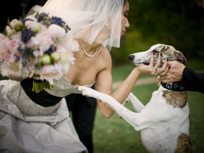 A bride and her dog, image by Amy and Stuart Photography