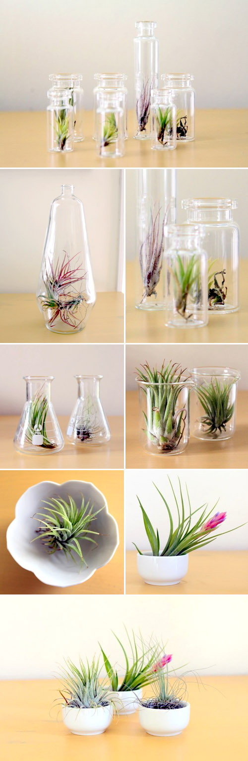 beautiful tillandsia air plants from Tortoise Loves Donkey, creative botanical wedding favors and decor