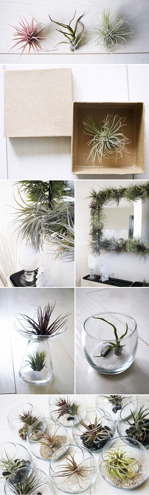 beautiful tillandsia air plants from To Hold, creative botanical wedding favors and decor