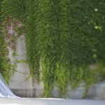 Elegant bride against a wall covered in vines- wedding photo by top Canadian wedding photographer Rebecca Wood