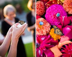 Stephanie cristalli photography, indian inspired wedding, seattle olympic sculpture park