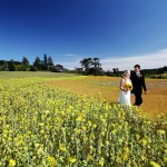 Colorful Summer Vineyard Wedding – Jillian and Chris