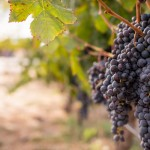 Napa Valley Bachelorette Party Getaway Ideas from Online Bachelorette Party Planning Resource The Bach