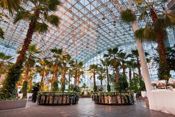 the-crystal-gardens
