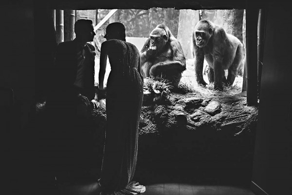 Quirky-Cool-Bronx-Zoo-Wedding-ein-photography (17 of 39)