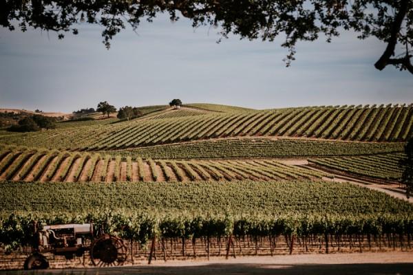 a-california-countryside-wedding-at-pomar-junction-vineyard-winery-33