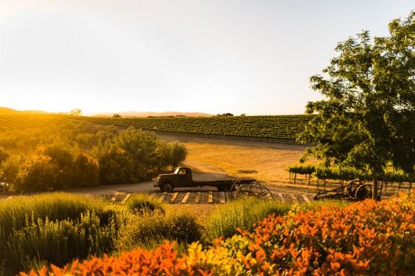 a-california-countryside-wedding-at-pomar-junction-vineyard-winery-36