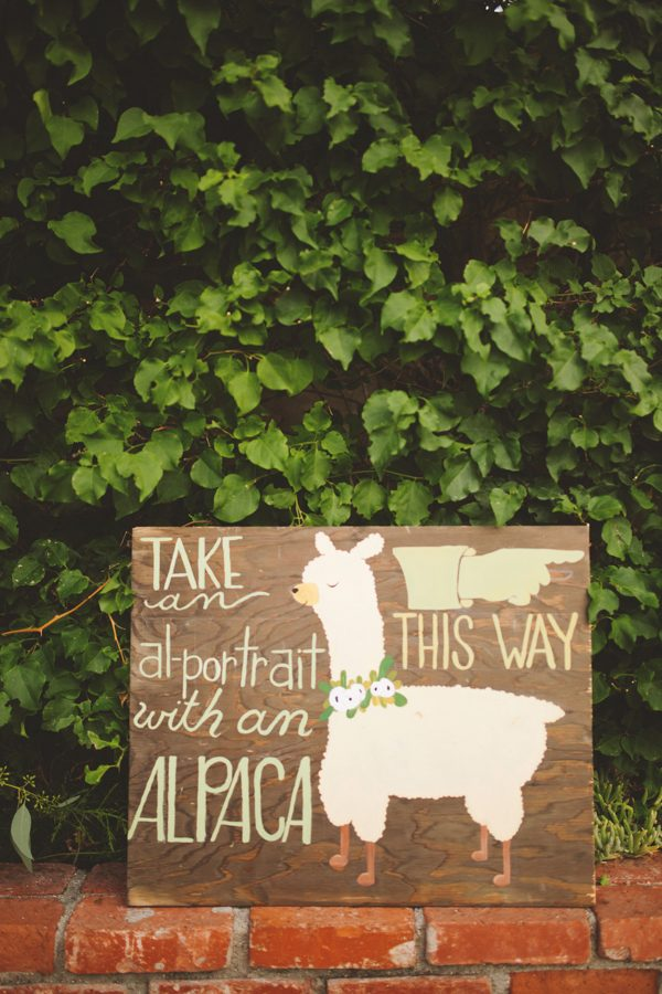 an-alpaca-almost-stole-the-spotlight-in-this-hummingbird-nest-ranch-wedding-19