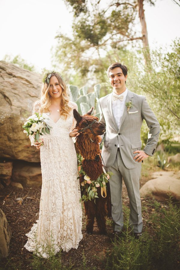 an-alpaca-almost-stole-the-spotlight-in-this-hummingbird-nest-ranch-wedding-22
