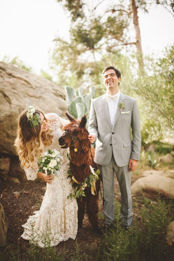 an-alpaca-almost-stole-the-spotlight-in-this-hummingbird-nest-ranch-wedding-23