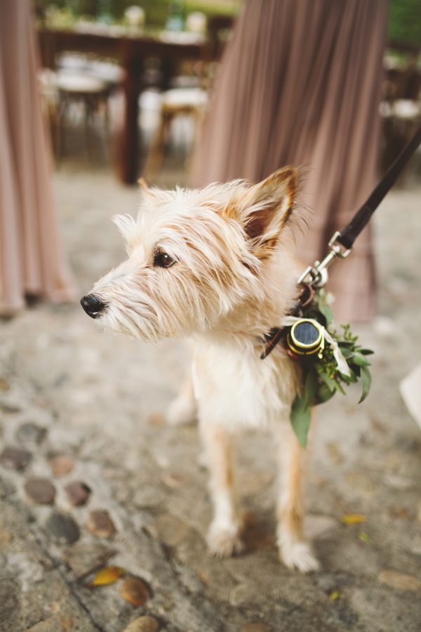 an-alpaca-almost-stole-the-spotlight-in-this-hummingbird-nest-ranch-wedding-31