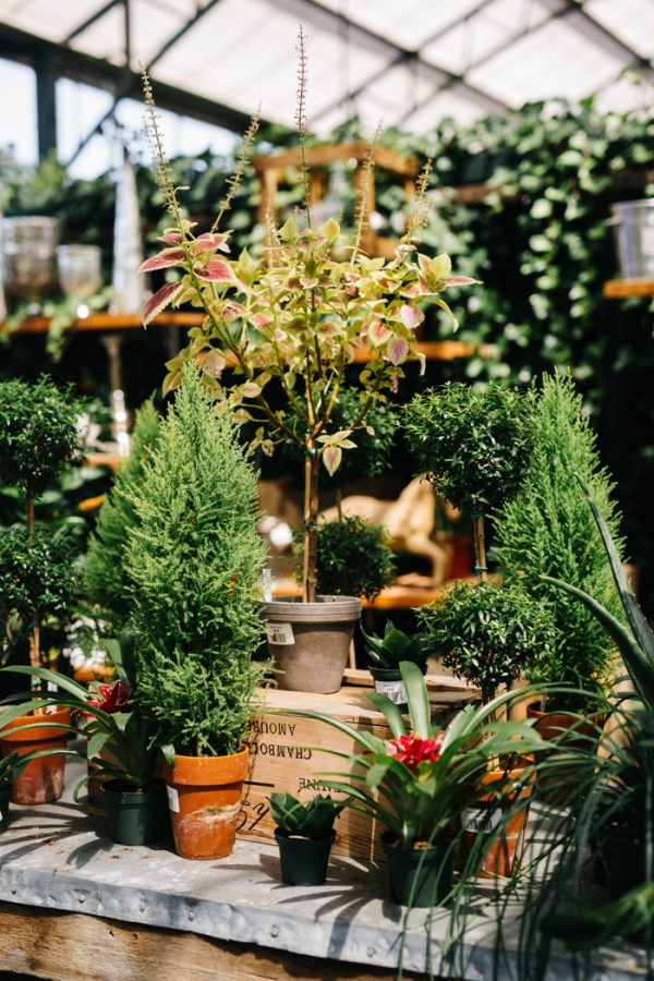 overwhelmingly-lush-michigan-wedding-at-the-planterra-conservatory-4