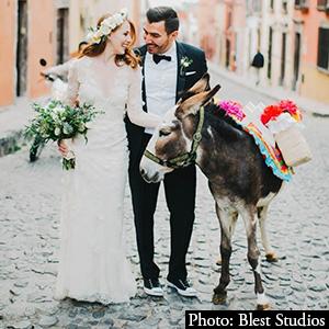 This Festive Donkey