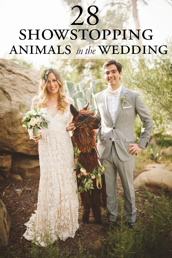 animals-in-the-wedding